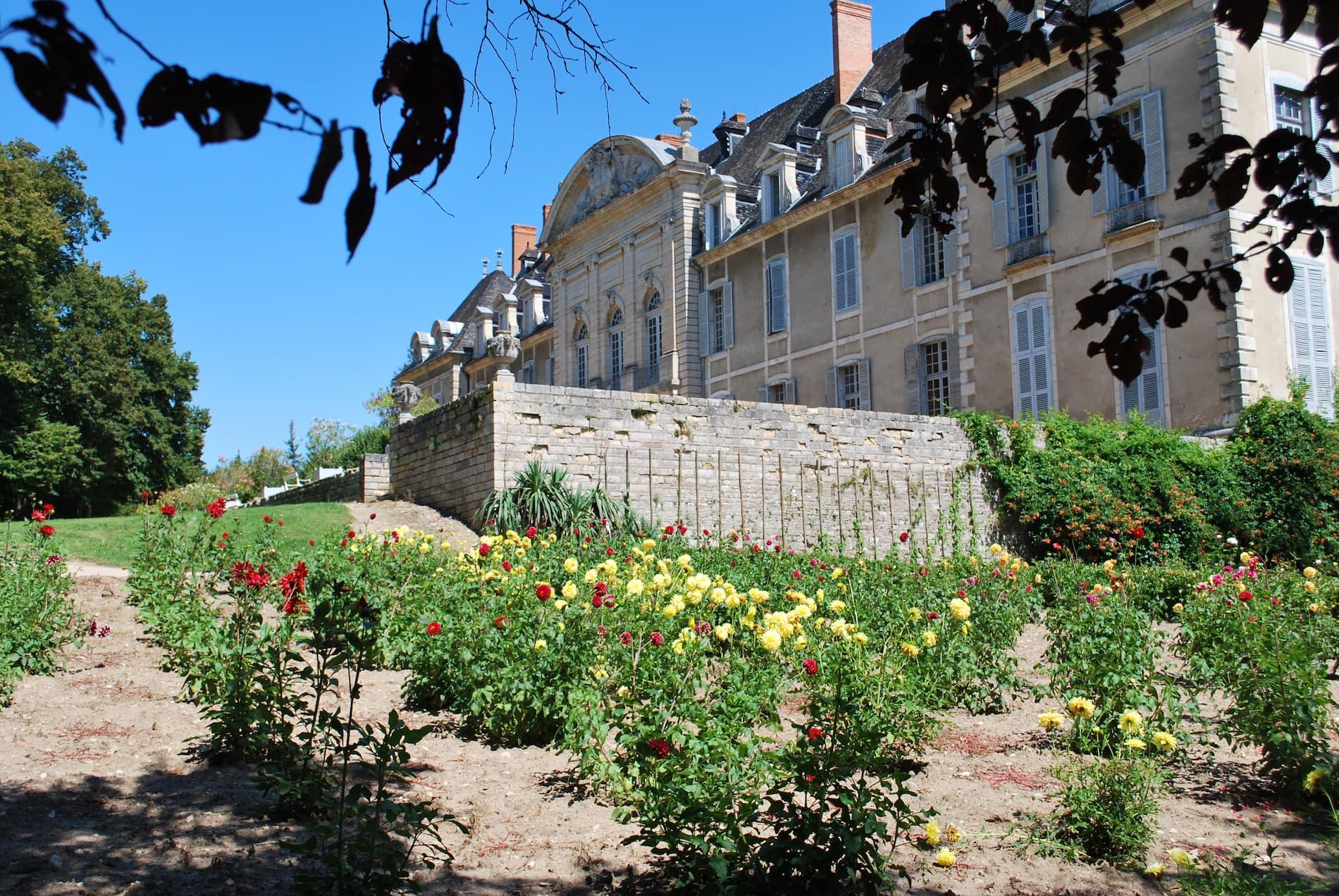jardin-fleurs-dahlia